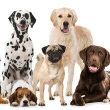 Sterilizzazione gratuita per i cani dei cittadini che versano in condizioni economiche disagiate