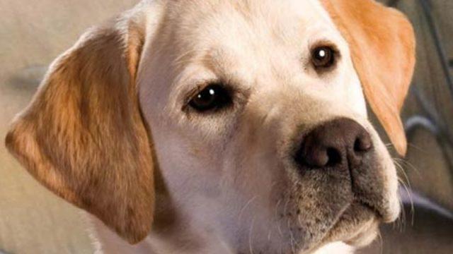 Iniziativa di sterilizzazione cani
